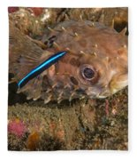 Burrfish And Cleaner Goby Fleece Blanket