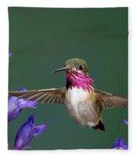 Calliope Hummingbird Stellula Calliope Fleece Blanket