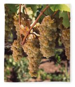 Chardonnay Grapes In Vineyard, Carneros Fleece Blanket