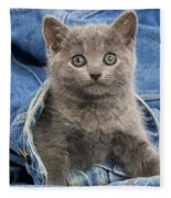 Chartreux Kitten Fleece Blanket