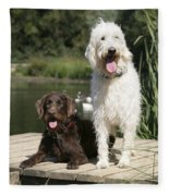 Chocolate And Cream Labradoodles Fleece Blanket