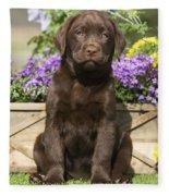 Chocolate Labrador Puppy Fleece Blanket