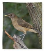 Clay-colored Thrush Fleece Blanket
