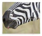 Close-up Of A Burchells Zebra Equus Fleece Blanket