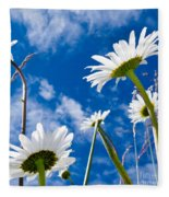 Close-up Shot Of White Daisy Flowers From Below Fleece Blanket