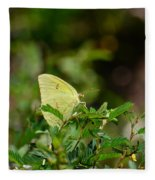 Clouded Sulphur Butterfly Fleece Blanket