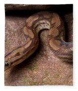 Colombian Rainbow Boa Epicrates Maurus Fleece Blanket