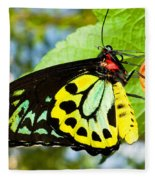 Common Birdwing Butterfly Fleece Blanket