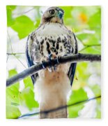 Coopers Hawk Perched On Tree Watching For Small Prey Fleece Blanket