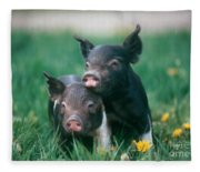Domestic Piglets Fleece Blanket