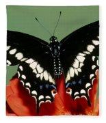Eastern Black Swallowtail Butterfly Fleece Blanket