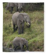 Elephants Fleece Blanket