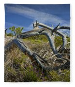 Fallen Dead Torrey Pine Trunk At Torrey Pines State Natural Reserve Fleece Blanket
