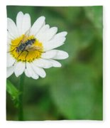 Fly On Daisy 3 Fleece Blanket