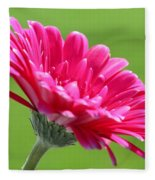 Gerbera Daisy Named Raspberry Picobello Fleece Blanket