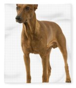 German Or Standard Pinscher Fleece Blanket