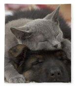German Shepherd And Chartreux Kitten Fleece Blanket