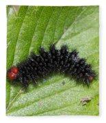 Glanville Fritillary Butterfly Caterpillar - Melitaea Cinxia Fleece Blanket