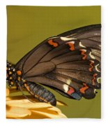 Gold Rim Swallowtail Butterfly Fleece Blanket