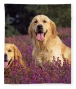 Golden Retriever Dogs In Heather Fleece Blanket