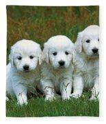 Golden Retriever Puppies Fleece Blanket