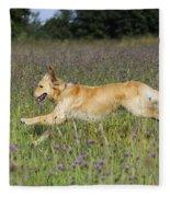 Golden Retriever Running Fleece Blanket