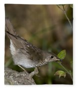 Gray-cheeked Thrush Fleece Blanket