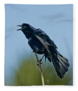 Great-tailed Grackle Fleece Blanket