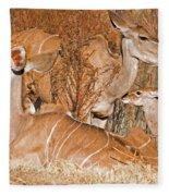 Greater Kudu Mother And Baby Fleece Blanket