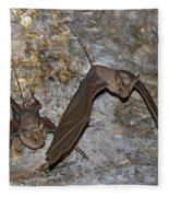 Greater Mouse-tailed Bat Rhinopoma Microphyllum Fleece Blanket