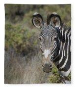 Grevys Zebra Stallion Fleece Blanket