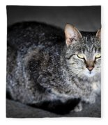 Grey Cat Portrait Fleece Blanket
