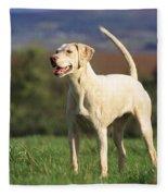 Harrier Dog Fleece Blanket