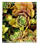 Hens And Chick Plants Fleece Blanket