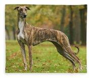 Hungarian Greyhound Fleece Blanket