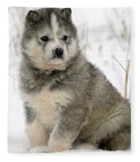 Husky Dog Puppy Fleece Blanket