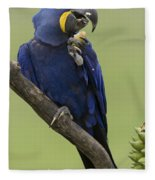Hyacinth Macaw Eating Palm Nut Fleece Blanket