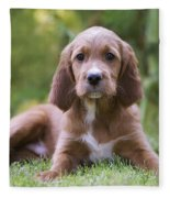 Irish Setter Puppy Fleece Blanket