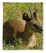 Klipspringer Antelope Fleece Blanket