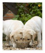 Labrador Puppies Eating Fleece Blanket
