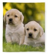 Labrador Puppies Fleece Blanket