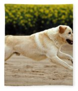 Labrador Retriever Dog Fleece Blanket
