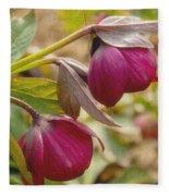 Lenten Roses  Fleece Blanket