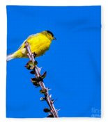 Lesser Goldfinch Fleece Blanket
