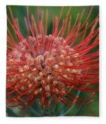 Leucospermum - Pincushion Protea - Tropical Sunburst Protea Flower Hawaii Fleece Blanket