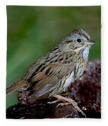 Lincolns Sparrow Fleece Blanket
