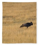 Lion On The Hunt Fleece Blanket