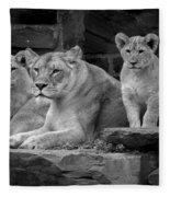 Lioness And Cubs Fleece Blanket