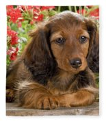 Long-haired Dachshund Fleece Blanket
