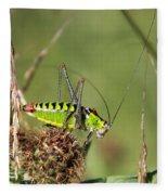 Long-horned Katydid Tettigonid Fleece Blanket